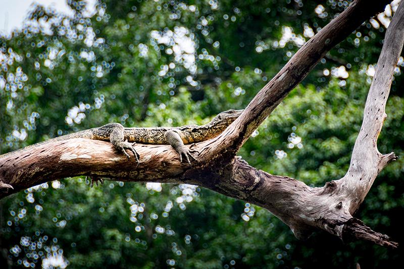 Khao Sok Nationalpark - Cheow Lan See