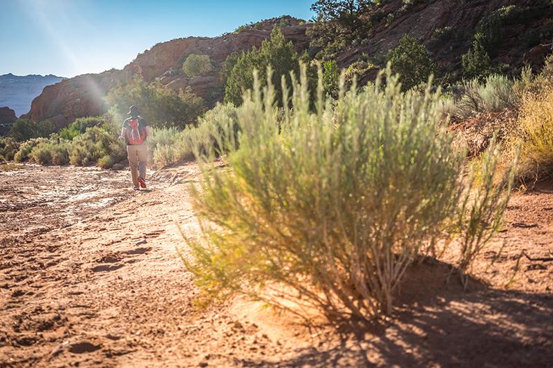 The Wave Wüste Busch